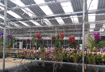 Smart Glass Greenhouse Project in Sa···