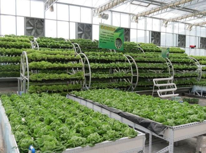Introduction and characteristics of intelligent agricultural glass greenhouse