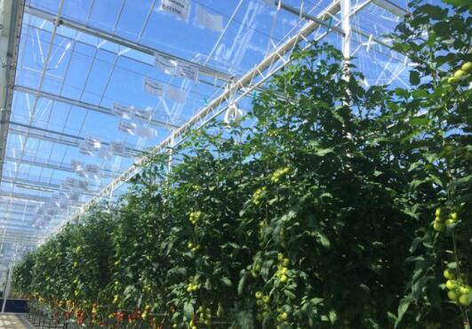 The cost and characteristics of agricultural glass greenhouse